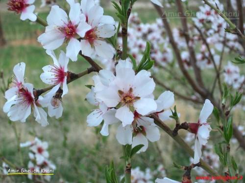 گل های بهاری 1