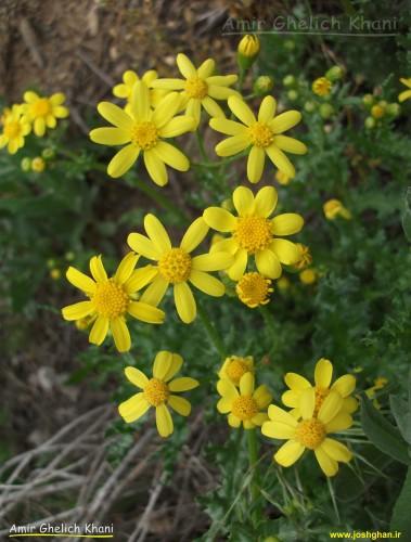 گل های بهاری 2