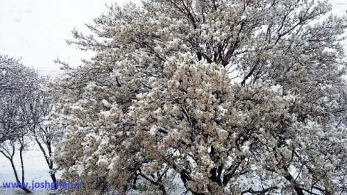 photo_2016-03-17_20-21-50