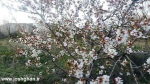 photo_2016-04-01_15-57-20-300x169